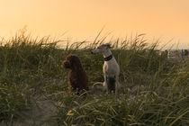 Ein Tag am Strand / 20 von Heidi Bollich
