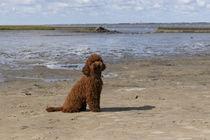 Ein Tag am Strand / 24 von Heidi Bollich