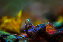 Autumn leaf  by Michael Naegele