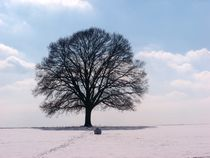 Baum im Schnee 3 von Regina Raaf