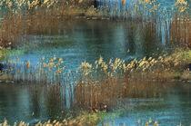 Am See von Irmtraut Prien
