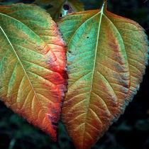 Herbstduo von Irmtraut Prien