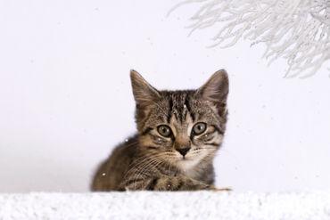 Dsc-1373-dot-af-kitten-schnee-09-19