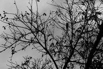 Winter Tree B&W von fer9an618