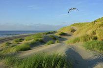 Dünen an der Nordsee by Claudia Evans