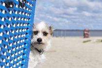 Ein Tag am Strand / 25 von Heidi Bollich