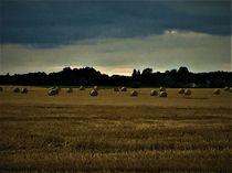 Field by giart1