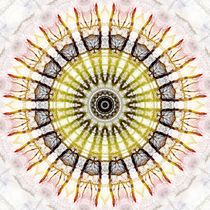 Mandala starke Wurzeln von Christine Bässler
