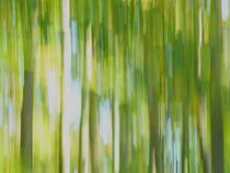 Wald-10-19-1 by maja-310