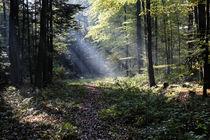 Lichtstrahlen im Forst von Rolf Müller