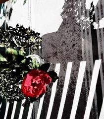Schattenspiel mit Rose von Kiki de Kock