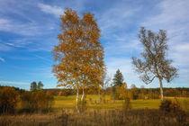 Landschaft im Naturschutzgebiet Irndorfer Hardt - Naturpark Obere Donau von Christine Horn
