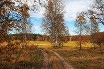 Landschaft im Naturschutzgebiet Irndorfer Hardt III - Naturpark Obere Donau von Christine Horn