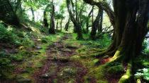 Waldweg von Torsten Reuschling