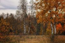Landschaft im Naturschutzgebiet Irndorfer Hardt IV - Naturpark Obere Donau von Christine Horn