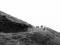 icelandic horses by Ralf K. Lang