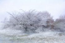 Winterzeit by Claudia Evans