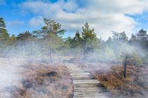 Nebel im schwarzen Moor von Claudia Evans