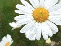 Blume Nahaufnahme von Christian Mueller