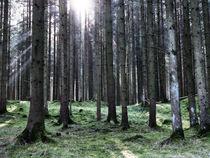 Grüner Wald mit einscheinender Sonne by Christian Mueller