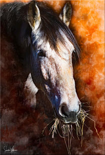 Horsemoments by Sandra  Vollmann