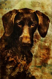 Deutsch Drahthaar Fine Art Portrait  von Sandra  Vollmann