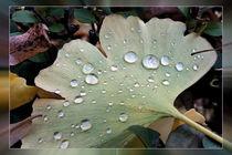 Drops of rain by feiermar