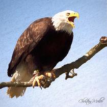 Weißkopf Adler im gemalten Look von Christian Mueller