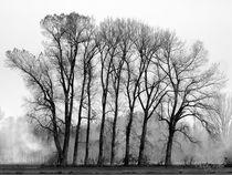 Bäume im Nebel / Schwarzweiß Fotografie von Christian Mueller