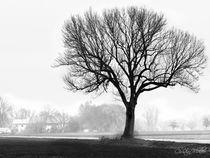 Baum im Nebel by Christian Mueller