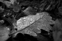 Dew Drops on Autumn Leaves by cinema4design