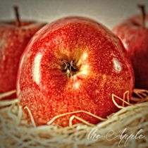 The Apple  by Peter Hebgen
