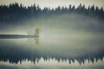 Autumn colored trees are growing at the shore of a misty and smooth lake von Intensivelight Panorama-Edition