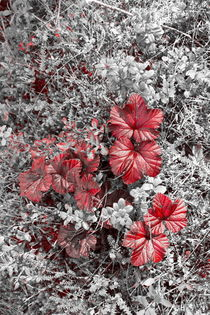 Cloudberry leaves in autumn - duotone by Intensivelight Panorama-Edition