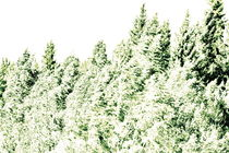 Birch trees are shaking their leaves in a summer wind - duotone von Intensivelight Panorama-Edition