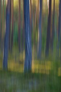 Pine trunks in summer - motion blur von Intensivelight Panorama-Edition