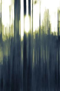 The sinking sun is shining through pine trees -duotone von Intensivelight Panorama-Edition