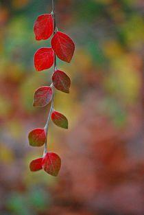 Herbstleuchten... 1 by loewenherz-artwork