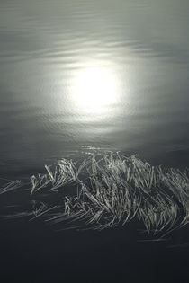 The morning sun is reflected in a lake where seagrass is floating on the surface von Intensivelight Panorama-Edition