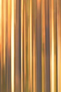 Forest stripe pattern von Intensivelight Panorama-Edition