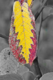 Vibrant zig-zag patterned autumn leaf by Intensivelight Panorama-Edition