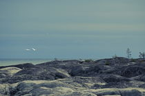 Two mute swans are flying over the rocky shore of the Baltic Sea - duotone von Intensivelight Panorama-Edition
