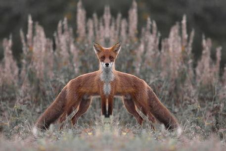 No-fox918-53-nik-c-pp-col