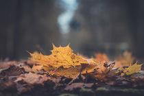 Herbstblatt von Iryna Mathes
