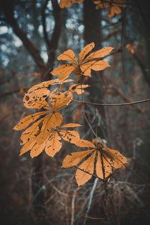 Herbstblätter von Iryna Mathes
