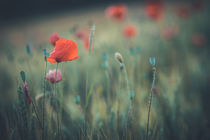 Die Mohnblume by Iryna Mathes