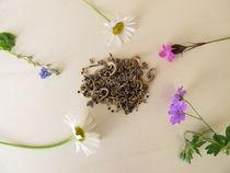 Bienenfreundliche Samenmischung und Wildblumen für Wildbienen von Heike Rau