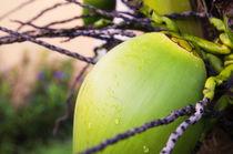 Coconut Palm in Caribbean Garden by Tanya Kurushova