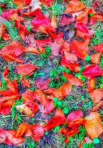 Autumn Glory von mimulux