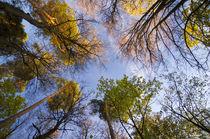 'Autumn Forest Bottom View' by Tanya Kurushova